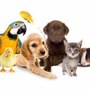 Pets & Aquarium